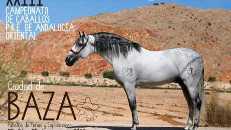 xxiii campeonato de caballos p.r.e.
